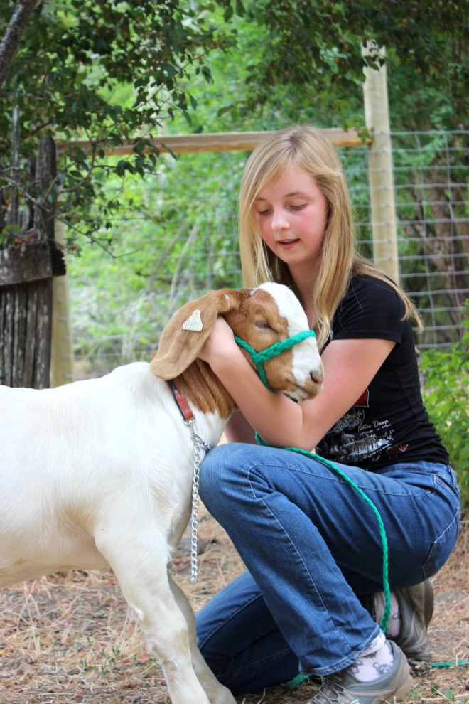 Sweet Little Wood. E. 4-H goat