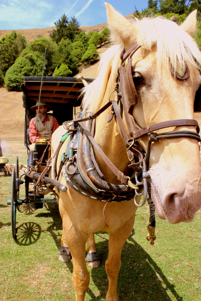 Horse and carriage.