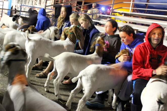 Morning: 5 a.m. waiting to load the goats onto a cattle truck.  Final goodbyes.