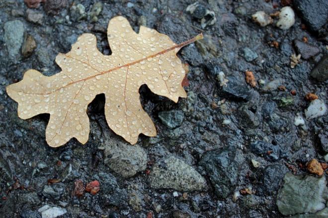 Leaves and rain @ Sweet Little Wood