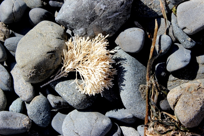 Seaweed & A Day at Small Creek, Northern California @ Sweet Little Wood