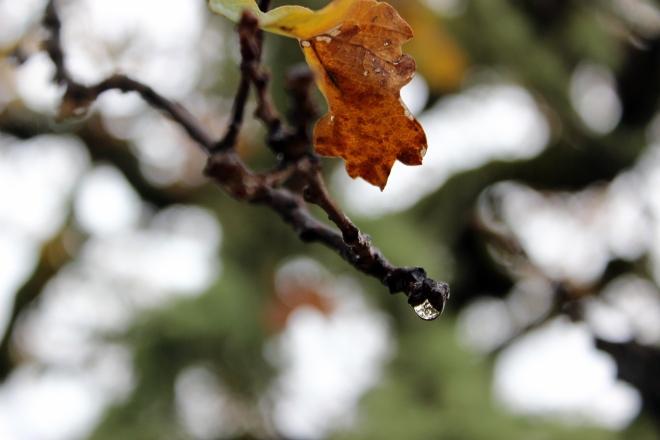 Rain on autumn leaves @ Sweet Little Wood