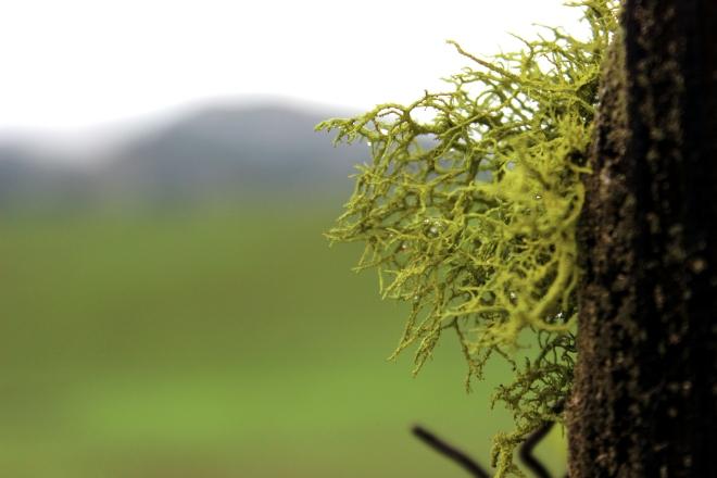 Rain on moss @ Sweet Little Wood