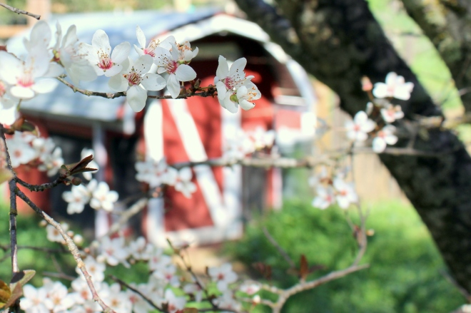 Spring blossom @ Sweet Little Wood