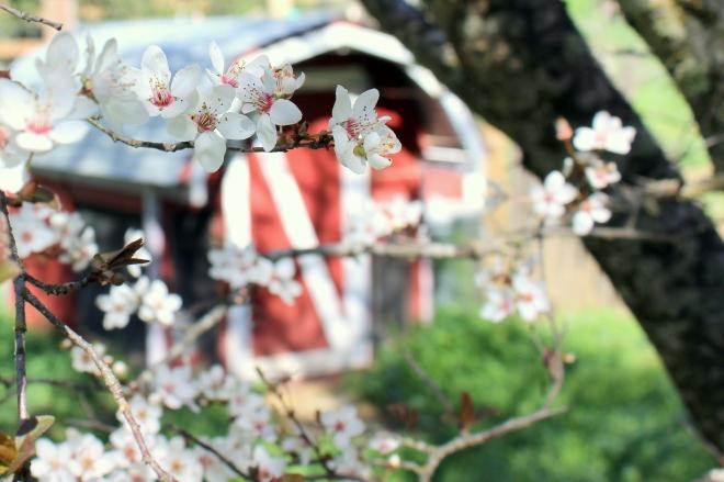 Spring blossom @ Sweet Little Wood