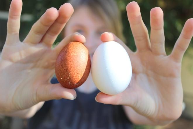 A hen's first egg vs full grown  hen's eggs